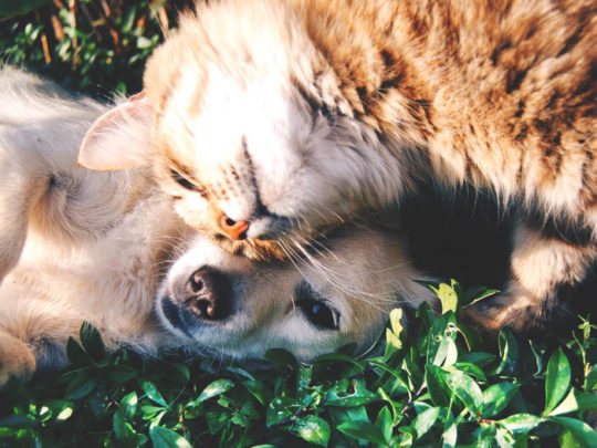 A Comprehensive Guide to Pet Funerals - Funeralocity