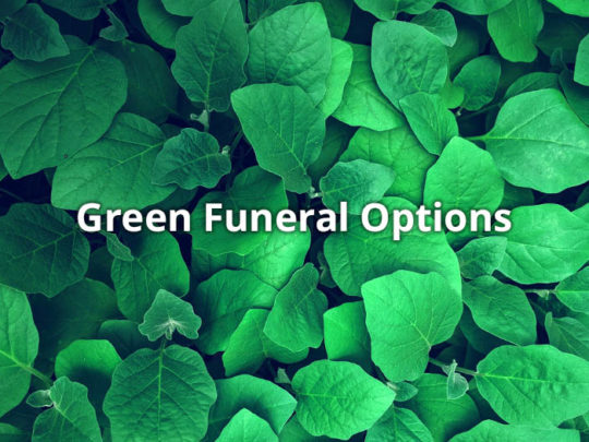 Eco-Friendly Green Funeral Options - Funeralocity