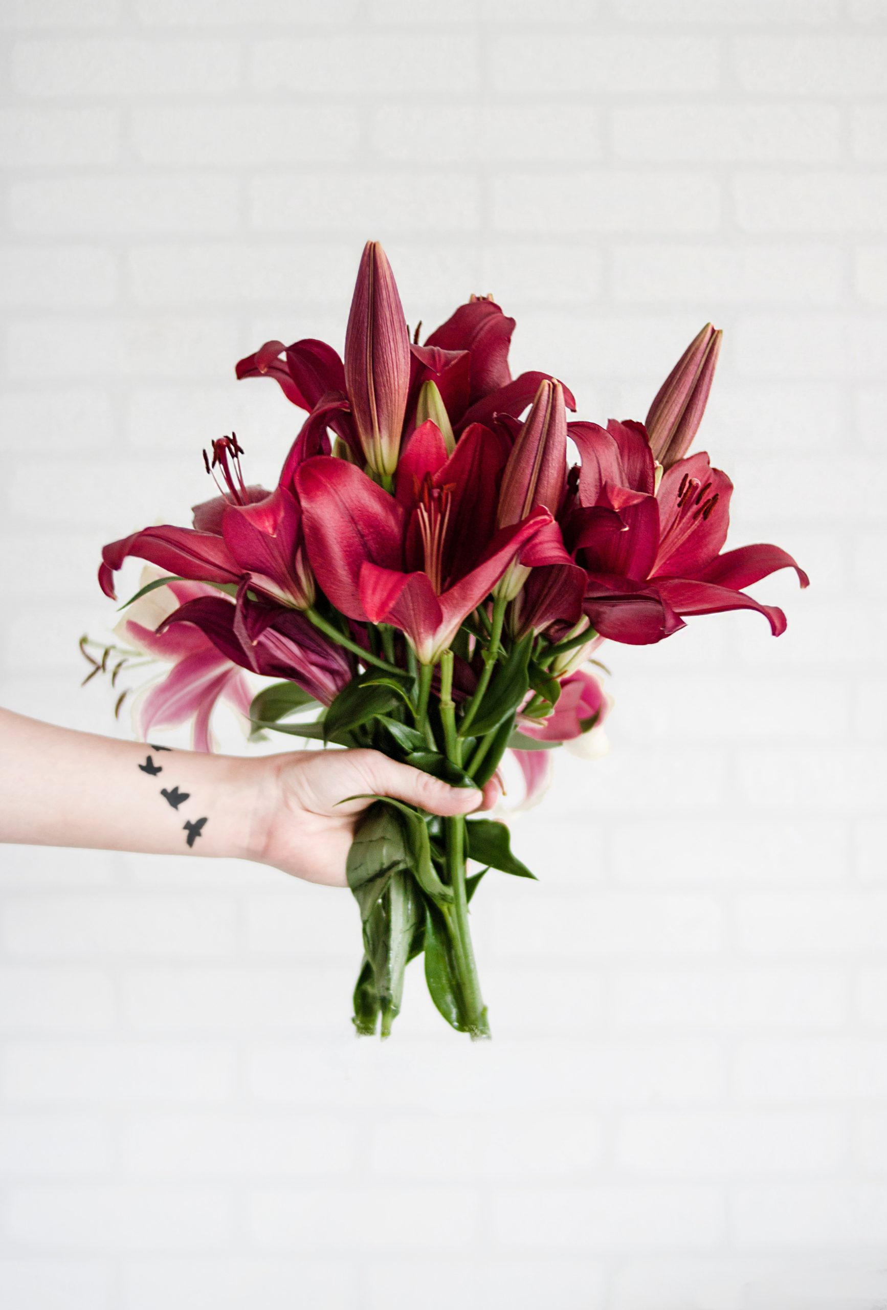 Person holding maroon stargazer flowers